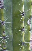 leica y pol-flor-1000741.jpg