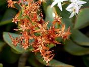 leica y pol-flor-1000790.jpg
