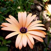 leica y pol-flor-1000805.jpg