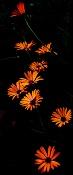 leica y pol-flor-1000825.jpg