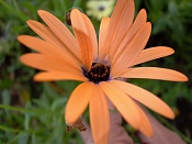 leica y pol-flor-1000835.jpg