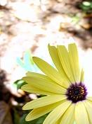 leica y pol-flor-1000812.jpg