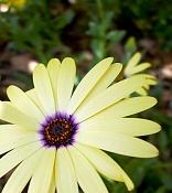 leica y pol-flor-1000809.jpg