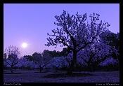 Fotos acortes-cimg1484-post-luna-y-almend.jpg