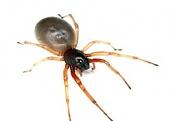 Rigging a spider-1.jpg