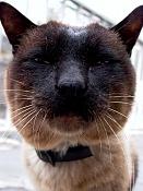 leica y pol-gato-1010241.jpg