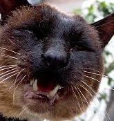 leica y pol-gato-1010250.jpg