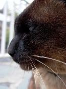 leica y pol-gato-1010262.jpg
