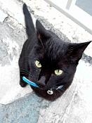 leica y pol-gato-1010212.jpg