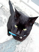 leica y pol-gato-1010213.jpg