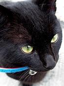 leica y pol-gato-1010221.jpg