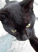 leica y pol-gato-1010226.jpg