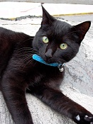 leica y pol-gato-1010235.jpg