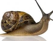 Como se hizo el super Caracol - Making of super snail-making-of-caracol-11.jpg