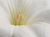 leica y pol-flor-1010159.jpg