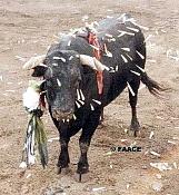 Corridas, tortura, ni arte ni cultura, tomemos conciencia-toro_con_dardos.jpg