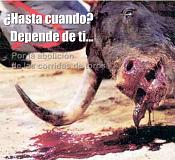 Corridas, tortura, ni arte ni cultura, tomemos conciencia-toros2.png