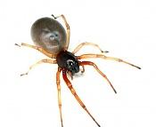 Esqueleto de una araña-esqueleto-arana-1.jpg