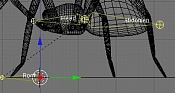 Esqueleto de una araña-esqueleto-arana-7.jpg
