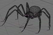 Esqueleto de una araña-esqueleto-arana-17.jpg