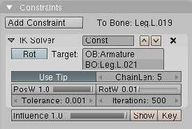 -esqueleto-arana-19.jpg