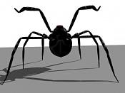 Esqueleto de una araña-esqueleto-arana-22.jpg