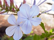 leica y pol-flor-1010518.jpg