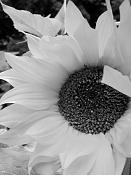 leica y pol-flor-1010540.jpg
