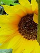 leica y pol-flor-1010537.jpg