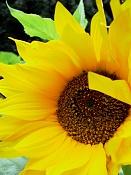 leica y pol-flor-1010539.jpg