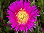Flora-100_1742.jpg