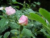 Flora-100_1536.jpg