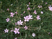 Flora-100_1562.jpg