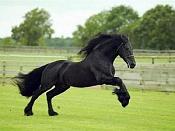 centaruro guerrero-20090202202527-imagenes-animales-caballos-1-.jpg
