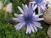 Flora-100_1793.jpg