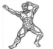 sketchs y algunos dibujos a tableta rapidos-muscletest0.png