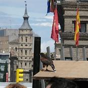 Fotos Urbanas-aguila-roja.jpg