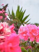 leica y pol-flor-1000042.jpg