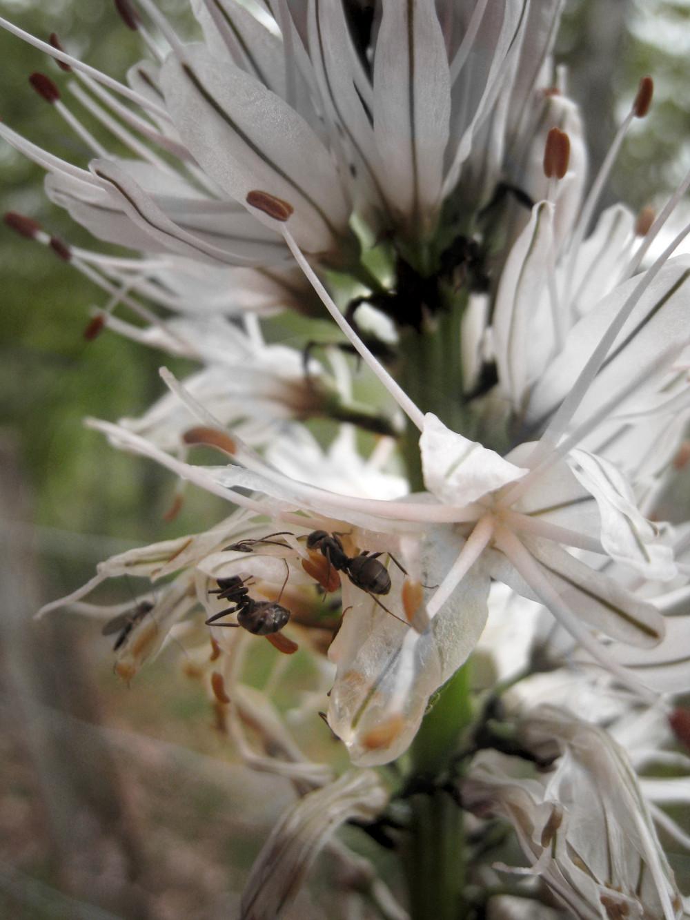 Fotoinstantes-hormigas.jpg