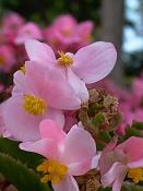 leica y pol-flor-1000149.jpg
