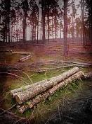 Fotoinstantes-deforestacion.jpg