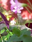 leica y pol-flor-1010169.jpg