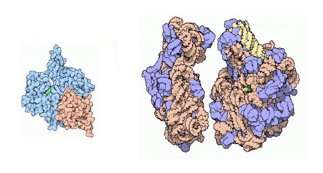 animation Molecular-3.jpg
