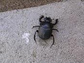 Estoy aburrido-44791-mirabel-escarabajo-gulapacho.jpg