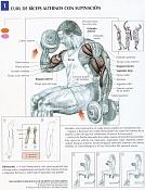 mega hollow-curl-biceps-alternos-con-supinacion.jpg