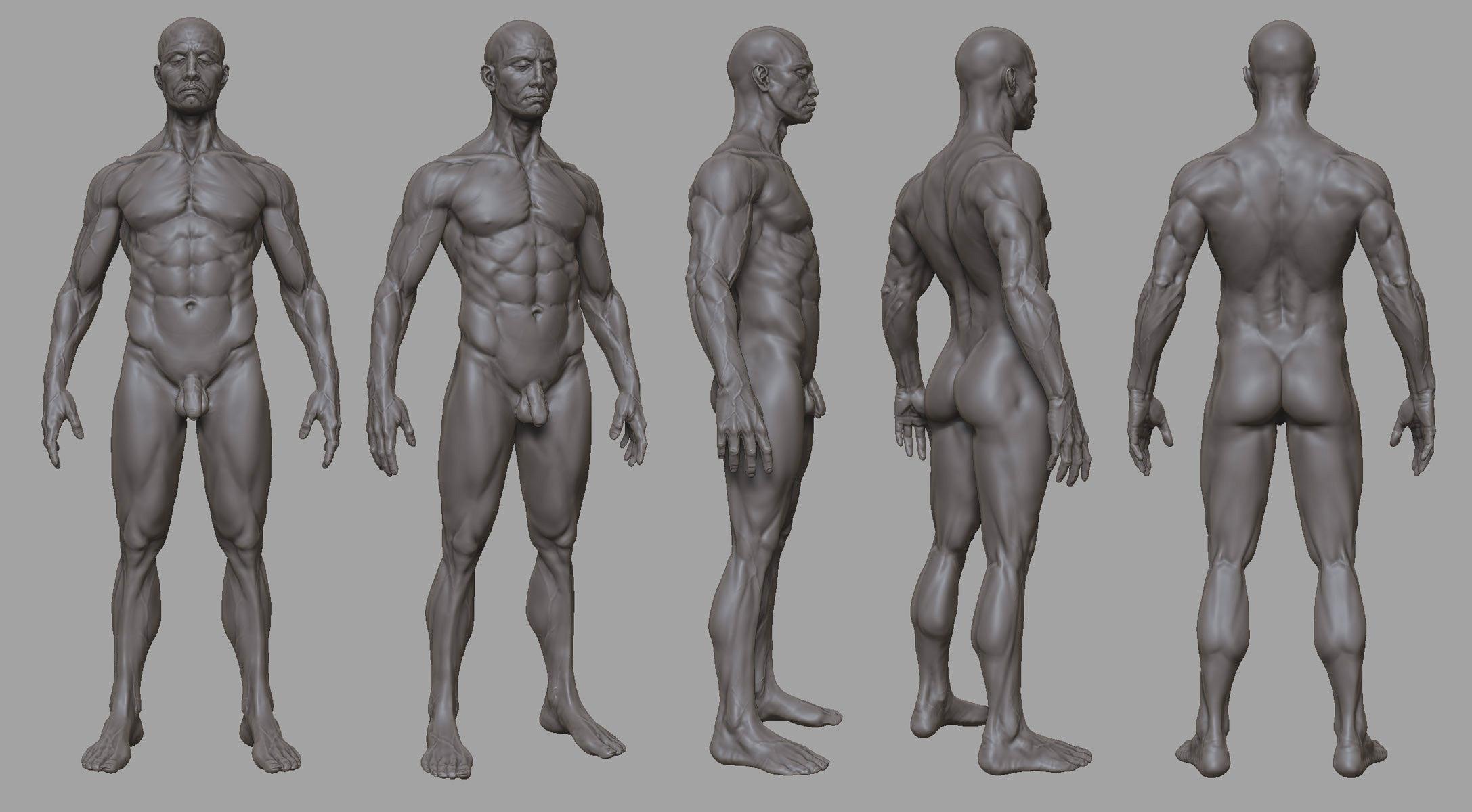 Mega Hollow-anatomy-study.jpg