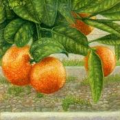 Dibujo artistico - El Pastelista-159-naranjo.jpg