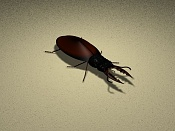 escarabajo, que opinan -escarabajo.jpg