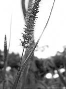 leica y pol-flores-1000578.jpg