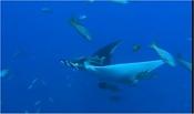 Oceanworld 3D-oceanworld3d-3.jpg
